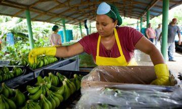 Fairtrade banana farmer, Dominican Republic.