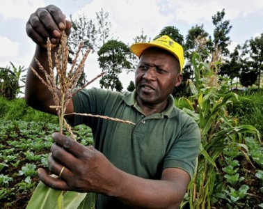 Kenya_farmer_Neil