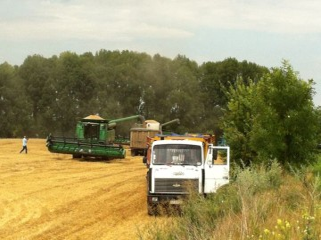 Ukranian-wheat-harvest
