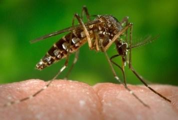 Zika-virus_mosquito
