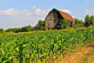 corn-farm-robert-harmon