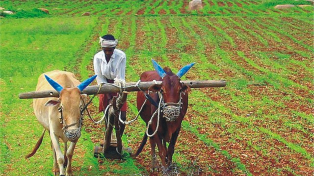 impact of dairy farming on livelihood