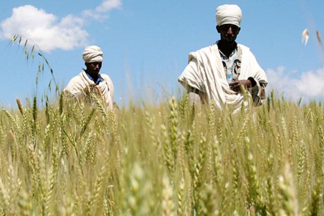 African-Breadbasket