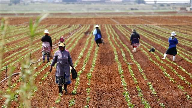 south_africa_farm001_16x9