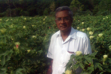 Ravi-standing-in-cotton_May-2013