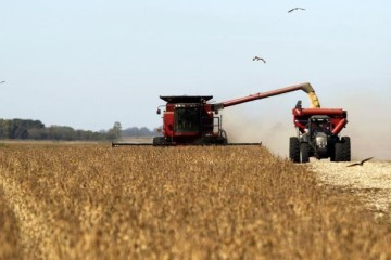 Soybean plants are harvested at a field in the city of Chacabuco in this April 24, 2013 file photo.  REUTERS/Enrique Marcarian/File