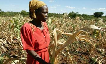 Zimbabwe talupoeg põllumajandustootja