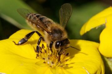 2014-05-29-HoneybeesEarthDrReeseHalter