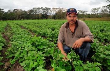 Farmer_in_bean_field,_Nicaragua