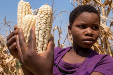 TO GO WITH AFP STORY BY FANUEL JONGWE A zimbabwean girl, Vimbiso Chidamba,  inspects some of the few remaining maize cobs in the family's granary as she gathers cobs in a sack for milling at her village in Musana Bindura on September 2, 2015. Villagers in Zimbabwe are skipping meals and foraging for wild fruit as food stocks run out after a poor harvest blamed on drought and controversial land reforms. AFP PHOTO/JEKESAI NJIKIZANA        (Photo credit should read JEKESAI NJIKIZANA/AFP/Getty Images)