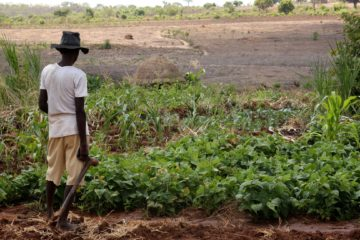 farmer_in_chimoio_1