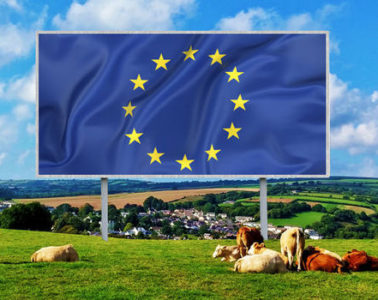 EU-flag-billboard-field-cows-farm-614313