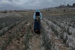 TOPSHOTS Α εργαζόμενος παίρνει προφυλάξεις ως τέφρα από το Κοτοπαξί ηφαίστειο πέφτει πέρα από τους τομείς των καλλιεργειών σε Machachi, Νότια του Κίτο στις Αυγούστου 22, 2015 μια εβδομάδα μετά το ηφαίστειο άρχισε να δείχνει δραστηριότητα από την τελευταία έκρηξη στα 1877. Σχεδόν 325,000 άνθρωποι θα μπορούσαν να επηρεαστούν από μια έκρηξη του Κοτοπαξί, το ηφαίστειο διαφαινόμενη πέρα από την πρωτεύουσα Ecuadoran του Κίτο, αξιωματούχοι είπαν ότι. Ο μεγαλύτερος κίνδυνος είναι από μια έκρηξη που λιώνουν τα 5.900-μέτρο (19,000-το πόδι) mountain's snowcap and triggering massive melt-water floods and lahar mudflows that could sweep through nearby towns.   ΦΩΤΟΓΡΑΦΊΑ ΤΟΥ ΓΑΠΕ / ΧΟΥΆΝ CEVALLOSJUAN CEVALLOS/AFP/Getty εικόνων ORG XMIT: