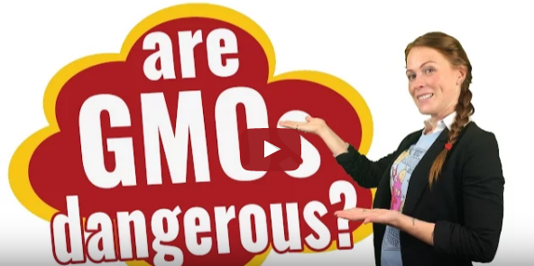 are-gmos-dangerous-video-snippet
