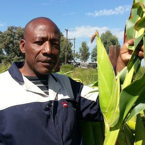 poljoprivrednici koji pronalaze mjesto u Južnoj Africi